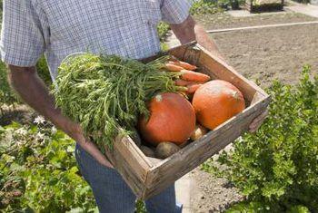 Dier-proofing jou groente boks