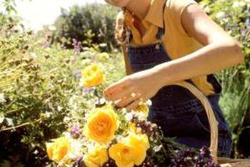 Is alfalfa pellets goed vir roosbosse?
