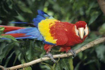 Is orgideë veilig by papegaaie?