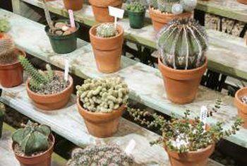 Verskillende kaktusse