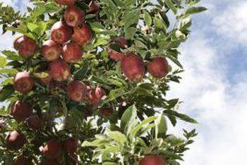 Inligting oor water en droogte vir appelbome