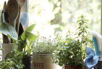 Klein, stadig groeiende binnenshuise plante vir vensterbanke