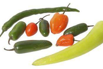 Hoe om relleno-pepers te plant