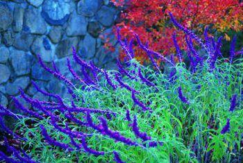 Landskapplante wat lae water en hoë son benodig