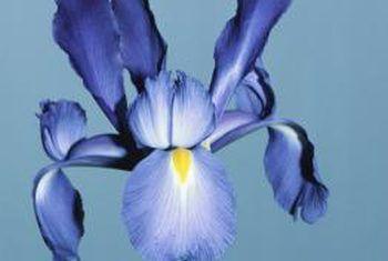 Verskillende soorte irisblomme
