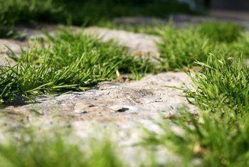 Hoe om gras te vermoor sonder om te grawe