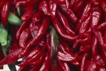 Hoe groot word `n tabasco peper?