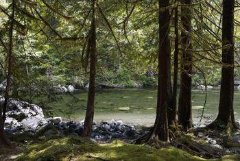 Hoe kan jou tuin bemesting en die toepassing van plaagdoders beïnvloed die gesondheid van `n rivier-ekosisteem?