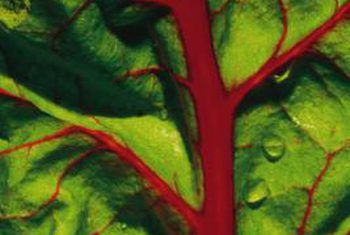 Hoe om plantluise te verwyder