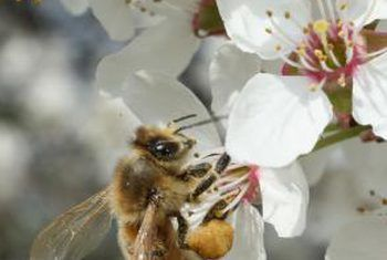 Hoe beïnvloed insekte insekte?