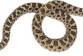 Hoe effektief is wilde slange by knaagdierbeheer?