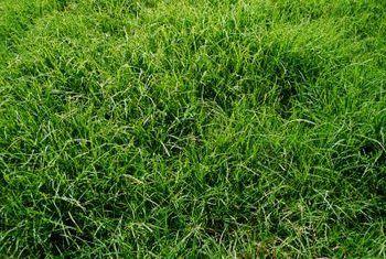 Hoe om grond te verbeter vir gras groei