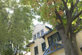 Tree verwydering veiligheid tegnieke