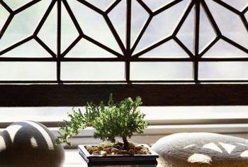 Boxwood bonsai sorg