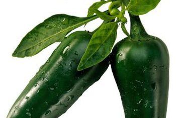 Gids vir die plant van jalapenos
