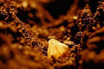 Wat is die effek van saaddiepte op plantegroei?