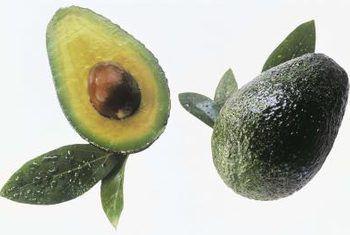 Grondvogkontrole vir hass-avokado`s