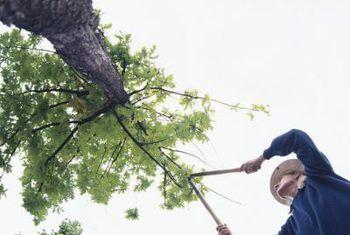 Die beste tye van die jaar om `n boom te wortel of snoei