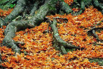 Tekens van boomwortelskade