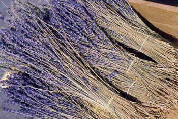 Hoe om droëknoppe van `n laventelplant te skei
