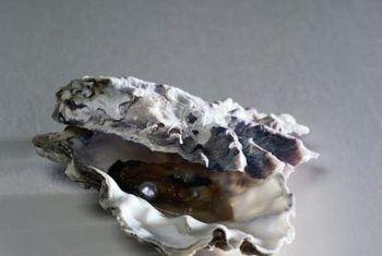 Hoe oesterskulpies in die tuin vir mol gebruik word