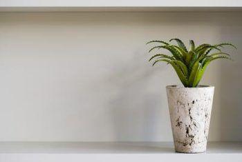 Binne plante wat floreer op verwaarlosing