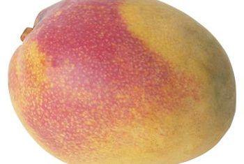 Die beste natuurlike voedingstowwe vir mangobome