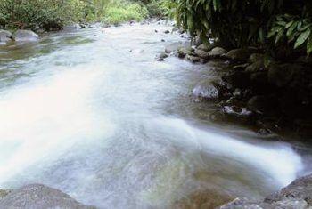 Rivier & stroom biome plante