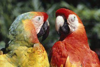 Veilige kamerplante vir papegaaie