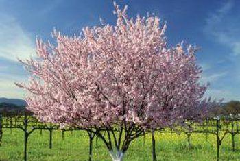 Hoe om `n appelboom te plant en die benodigde gat grootte