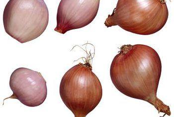 Hoe om salotte te oorplant