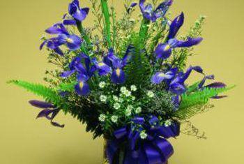 Hoe om `n Nederlandse iris te winter