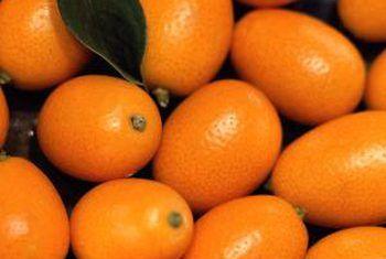 Hoe kumquat te plant