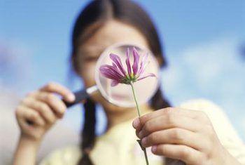 Wat is die vroulike dele van die blom?