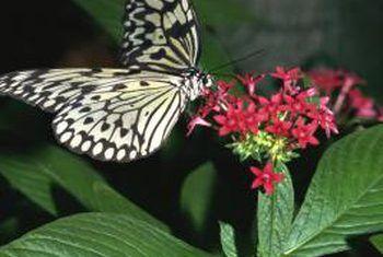 Watter blomme lei insekte en insekte af?