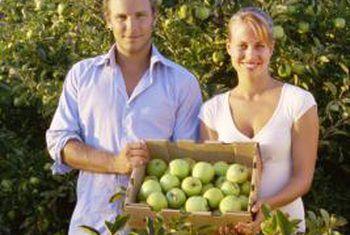 Hoe ver uitmekaar om ouma-smithbome te plant?