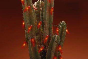Watter soort bogrond is vir kaktusse?