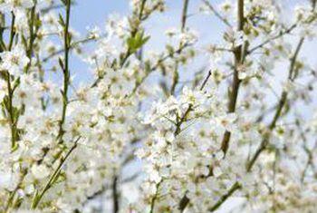 Vuil ruikende plante